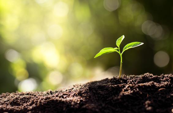 Pflanze wächst